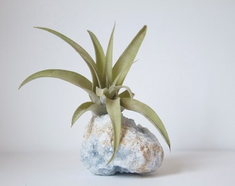 Airplant on Crystal Geode, Celestite Air Planter, Tillandsia Capitata, Boho Decor, Indoor Plant,  Celestine, Spiritual Gift Under 50