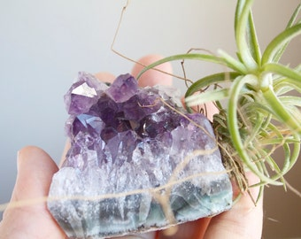 Air Plant on Amethyst Crystal, February Birthstone, Geode Chunk, Crystal Garden, Gift For Naturalist, Gardener,