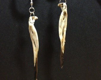 Real bird beak dangle earrings