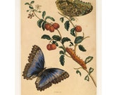 Vintage Butterfly Print  with Caterpillars Buy 3, get 1 Free