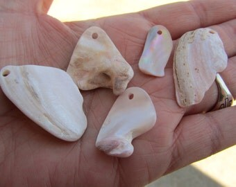 12, Surf Tumbled Shell Pendants