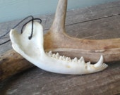 Opossum Jaw Bone Totem Necklace