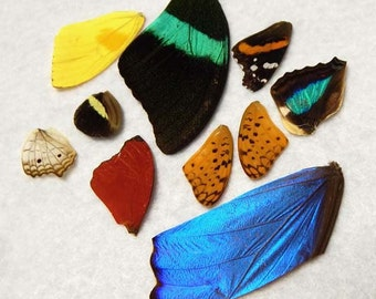Real Butterfly Wings - Natural authentic butterfly and moth wings - set2