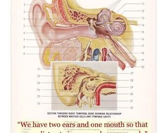 Vintage Anatomy Print The Human Ear with Epictetus Quote