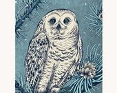 "Winter Snowy Owl 8x10"" Print"