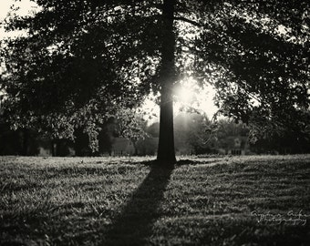 Noelridge Tree - 8 x 10 Fine Art Photograph