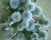 Grey Blue-Green Globe Thistle Dried Flower Heads on Stems for crafting, wreath making supplies, floral decor