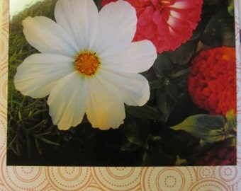 Instagram Photo Card -- Pink Zinnia, White -- Red/White Card -- Greeting Card -- Blank Inside