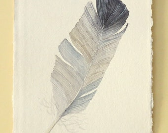 Feather original watercolour painting illustration