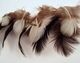 48  natural black Silver pheasant and white craft feathers earring feathers