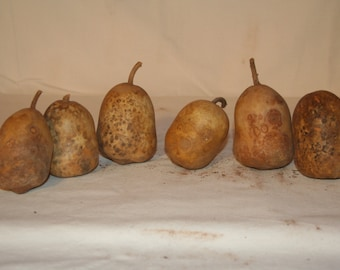 6 Bell shaped mini gourds, uncleaned