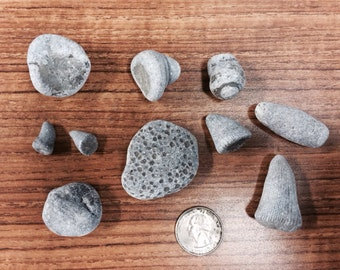 Lake Erie Fossils