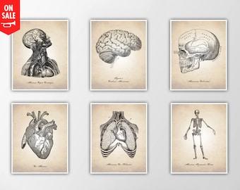 Human Anatomy Print, Human Anatomy Art Print, Anatomy Illustration, Medical Cross Section Art Print, Human Anatomy Print, Human Anatomy Art