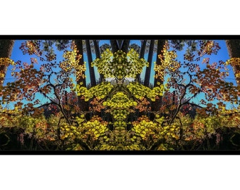 Mirror 1713 big 48x16 framed panorama canvas print_fall leaves mirror abstract photography_autumn forest_ Loree Harrell The Mirror Project