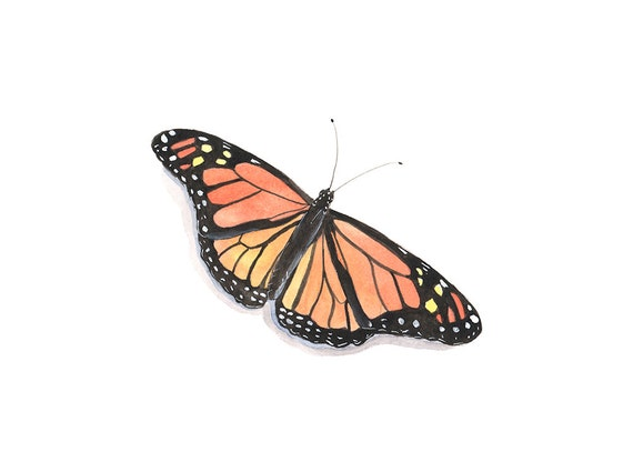 Watercolor painting - Butterfly Painting  - Nature insect orange - Print of watercolor painting  - 5 by 7 print