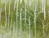 Woods, bright green, fat quarter, pure cotton fabric
