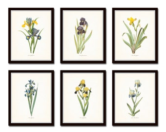 Antique Iris Botanical Print Set No.1, Redoute Botanicals, Art, Prints, Vintage Botanicals, Print Sets, Giclee, Iris, Collage, Illustration