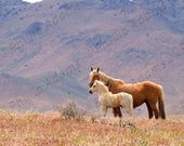 "Palomino Mare & Foal - Gallery Wrapped Canvas - 16"" x 20"""