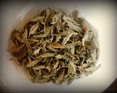 Silver Leaf Nightshade 1/2 oz. (Solanum elaeagnifolium)
