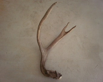 Real natural decorative deer antler design decor crafts art centerpiece gift rustic display