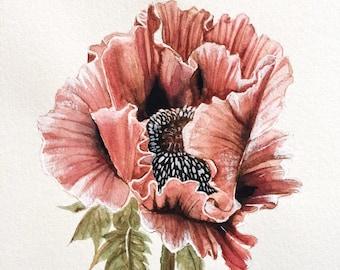 Pink Poppy - Original Watercolor
