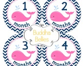 Baby Girl Nautical Monthly Stickers Navy Chevron and Pink Whales Nautical Baby Shower Gift  Monthly Creeper Bodysuit Stickers
