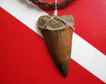 Shark Tooth Necklace with Stunning Colors, Mako shark tooth fossil, Shark Tooth HIll in Bakersfield-California, Silver plated wire wrap