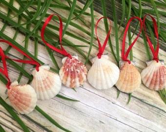 Glittered Seashell Christmas ornament, Christmas Shell Ornament, Christmas Ornament, Tropical Ornaments, shell Christmas Ornament,
