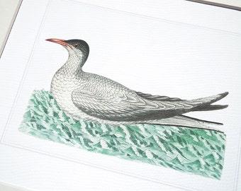 Bird Print 2 of Sea Bird on Blue Green Water Archival Print on Watercolor Paper