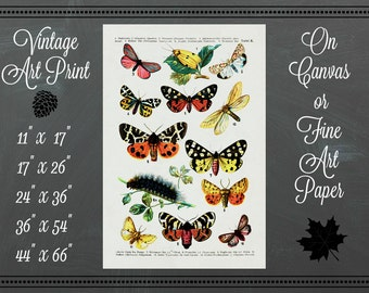 Butterflies Print / Canvas or Fine Art Paper / Vintage Art
