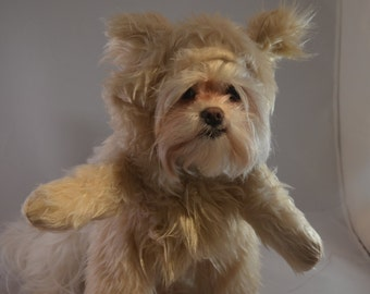 Adorable Cream Colored Teddy Bear Dog Halloween Costume/Hood
