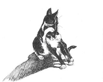 Cat pen and ink illustration -original artwork