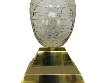 Monumental Polished and Mounted Genuine Tortoise Shell