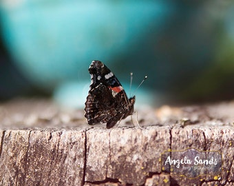 butterfly photo fine art photography print wall art