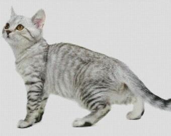 Burmilla Cat Cross Stitch Pattern 001