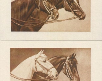 Schonian Sepias - 1900s Horse Postcards - An AHV Archival Editions © Set of Five from the Originals