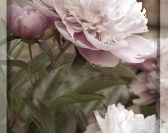 Pink Peony Fine Art Photography , Flower Photo , 4 X 6