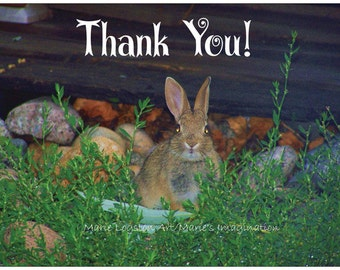 Bunny Photography Thank You Cards - Greeting Cards - Note Cards. Includes White Envelopes. Blank Inside.