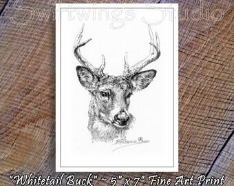 Wildlife Print - 5 x 7 Whitetail Buck Print - Wildlife Art - Whitetail Deer - Black and White Decor - Animal Print