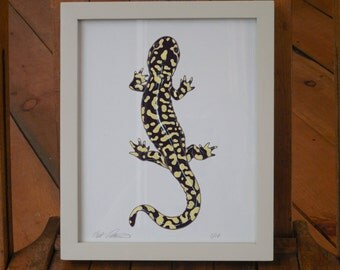 Tiger Salamander - framed 8 x 10 inch limited edition print by Matt Patterson