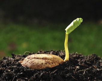 Seed Germination Service, We Germinate All Seeds