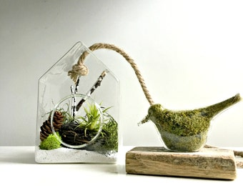 Glass Birdhouse terrarium wall hanging terrarium with air plant- glass bird with preserved moss  / Tillandsia air plant/ wall decor DIY kit