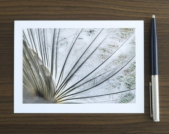 Blank Cards with Envelopes, Feather Photography Card Set of 4 to 8