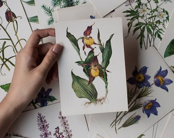 Set of 32 Botanical Cards - Rare and Endangered Plants Illustrations, Botanical Prints