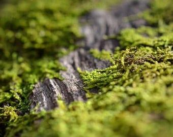 Woodland Photograph, Fairyland Path macro Moss Photography, Nature Horizontal Wall Art, Wood Tree Bark Nature Fine Art Nature Photo Print