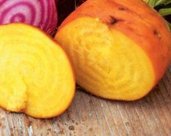 Touchstone Gold Beets Beet, OP Heirloom Seeds