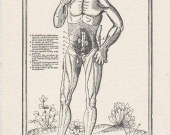 "Medical print , ready to frame , Charles Estienne  "" De dissectione"" 1546"