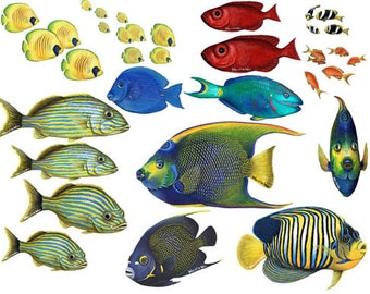 Tropical Fish Combo Pack