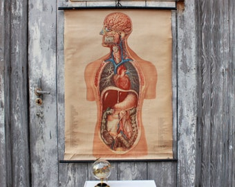 Anatomical wall chart, doctor's map, human body chart, vintage pull down chart, biological map, school