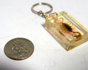 Souvenir of the Southwest, Arizona.  Real scorpion encased in lucite, key ring. 1970-80s.  Very good condition